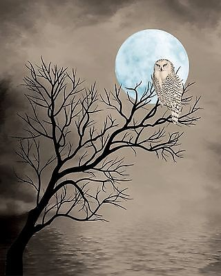 Turquoise Brown Sepia Owl Tree Silhouette Moon Wall Art Photo Print Home Decor