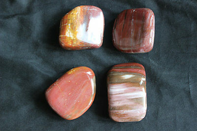 4 Natural Red Wooden Fossil Silicified Wood Crystal Stone Polished Healing