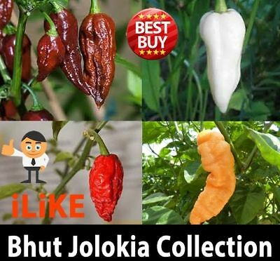 Bhut Jolokia/Ghost Chilli Collection 40 Seeds Minimum One Of The Worlds Hottest