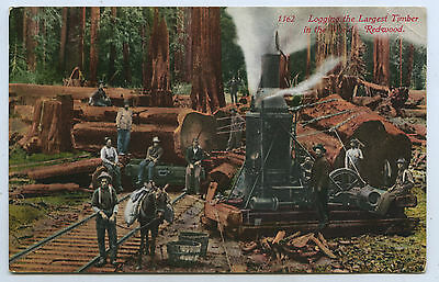 C1910 Pt Npu Postcard Redwood Logging California Usa Y29