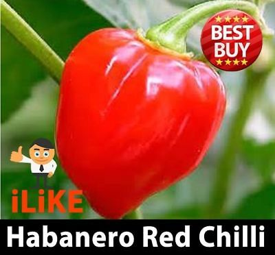 Habanero Red Chilli Pepper Seeds x 20 Vegetable Garden Plant