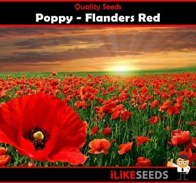 Poppy Flanders Red 1000 Seeds Minimum Colourful Garden Flower Plant. Cup Shaped.