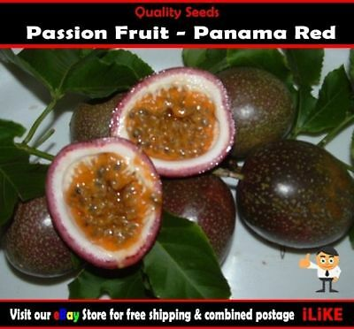 Passionfruit Panama Red 15 Seeds Minimum Garden Fruit Plant. High Yielding.
