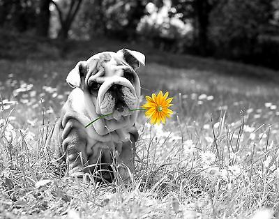 Yellow Gray Wall Art Photo Print Shar Pei Dog Home Decor Daisy Flower Picture