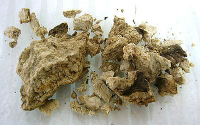 Jalap Root (High John) 5g Herb Herbal Spiritual Magickal Ritual Folk Ingredients