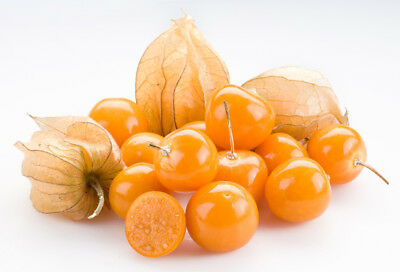 Ground Cherry (50 thru 1/2oz seeds) Perfect Heirloom for Pies & Snacking! ST#270