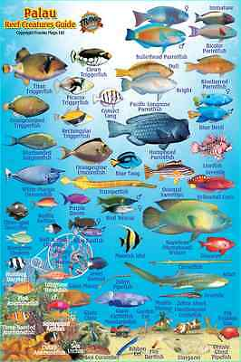 "Franko Palau Reef Creatures Guide Laminated Fish Identification Card 4"" x 6"""