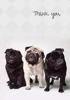 Pug Trio Boxed Thank You Notecards (6 folded blank cards)
