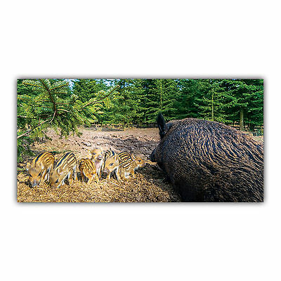 Sanglier Tableau Poster Décoration Photo Nature Animal Chasseur Gibier ARIMAJE