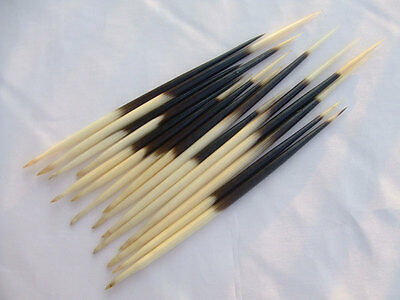 Porcupine Quills Jewelry Craft Hair Stick Weaving Beading Assorted 3 - 9.5 inch