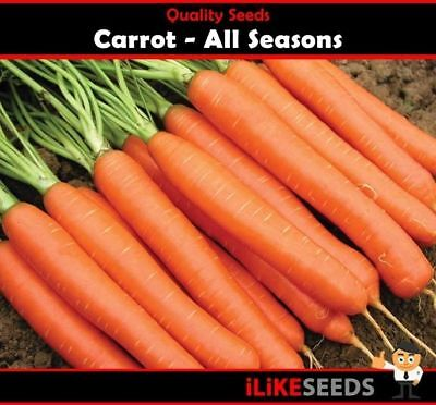 Carrot All Seasons 100 Seeds Minimum. Vegetable Garden Plant. All Year Round !