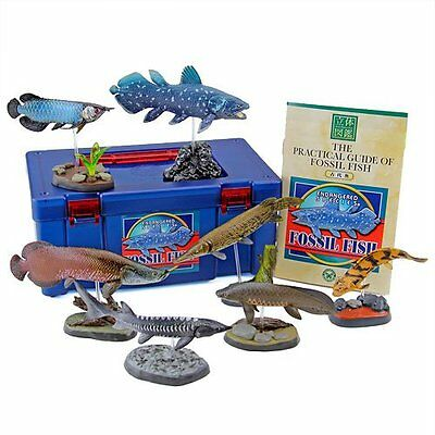 NEW!! Colorata Real Figure box Set Fossil Fish from JAPAN F/S