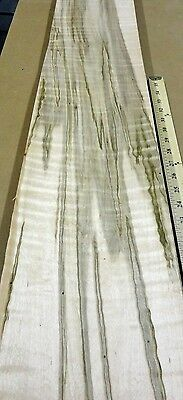 """Maple Spalted Wormy Figured wood veneer 7"""" x 120"""" raw no backing 1/42"""" thickness"""