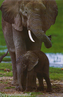 Poster:wild Animals - African Elephant -  Free Shipping #2229   Rap8 E