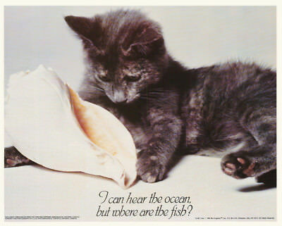 Small Poster:animals:cat: Cleo - I Hear The Ocean....  Free Ship #13-461  Rc13 F