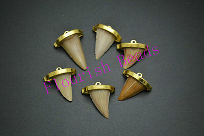 1pc Real Shark Teeth Pendant Small Size with Gold Claps DIY Necklace making