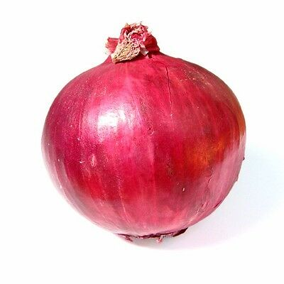 ( Short day )  Red Burgundy onion 200 seeds * NON GMO * ez grow * CombSH I43