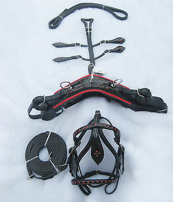 Complete Leather Miniature Horse Driving Harness In Black Color With Red Patent