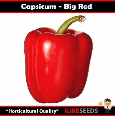 """Capsicum """"Big Red"""" 20 Seeds Minimum Vegetable Garden Plant. Very Large and Sweet"""