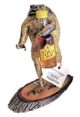Cane Toad On Stand With Rum Bottle