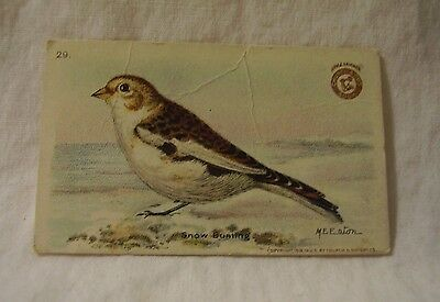 """Antique Arm & Hammer trade card """"Useful Birds of America"""" Snow Bunting #29"""