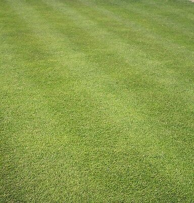 SPORTS & PLAYING FIELD GRASS SEED -PITCHES & TOUGH LAWNS  (Defra Reg. 7130)