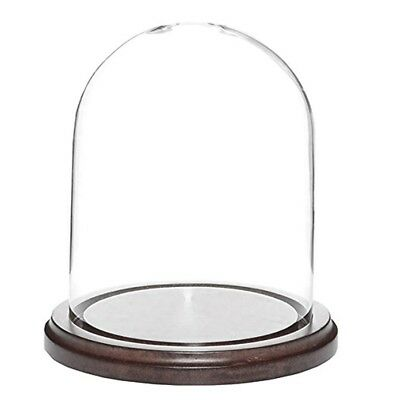 "6"" Glass Dome with Dark Walnut Wooden Base"