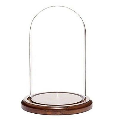 "7"" Glass Dome Wooden Base Ornament Display Case"