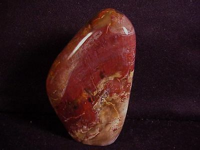 "~Rw~ Totally Polished ""petrified Wood Standup"" Specimen"