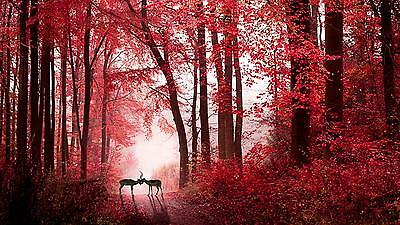 LOVE IN THE RED AUTUMN FOREST DEERS Large Wall Canvas Print 20x30 Inch