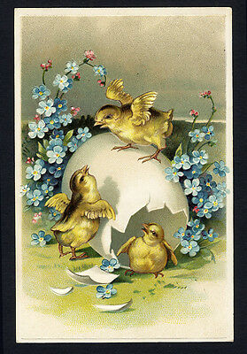 CHICKS - EGG Easter Greeting 1880-90s - Victorian Card - Forget Me Not Flowers