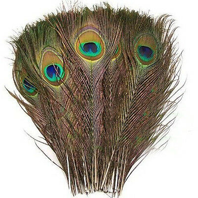 50pcs Natural Peacock Tail Feathers (Big Eyed) about 26-30cm AD