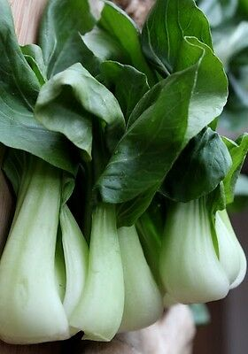 BABY BOK CHOY 200 seeds asian vegetable garden stir fry
