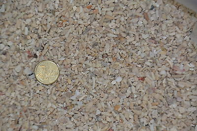 3kg Coral Sand 3-5 mm Substrate Aquarium Tank Marine EXPRESS AIR FREIGHT
