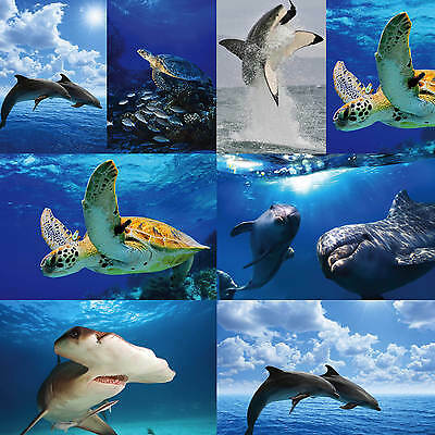 Sea Creatures, Shark, Dolphins Etc Posters Upto A1 Size,  Frames Available