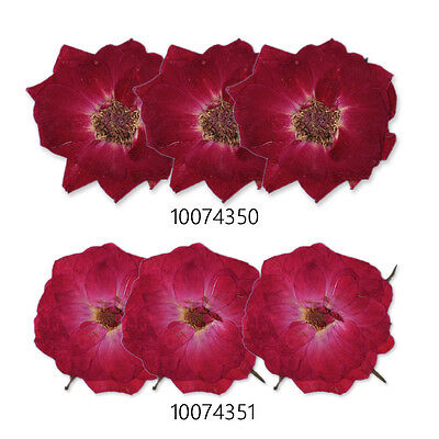 10pcs Rose Real Pressed Flowers dried pressed flower Nature jewelry