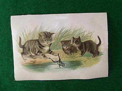 Victorian Trade Card Adorable Kittens After Frog Pond Humorous Image