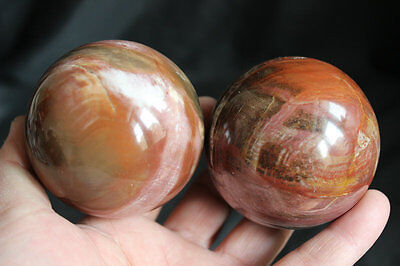 2 Red Natural Wooden Fossil Silicified Wood Crystal Sphere Ball Polished Healing