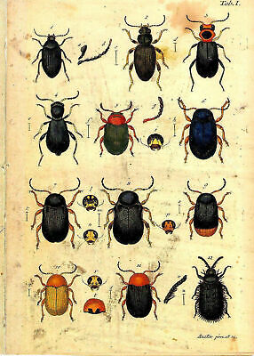 Set of 2 x Antique Natural History Prints 18th Century Insects Pictures