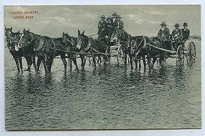 C1905 Pt Npu Postcard Buggies In Flooded Country South Australia M27