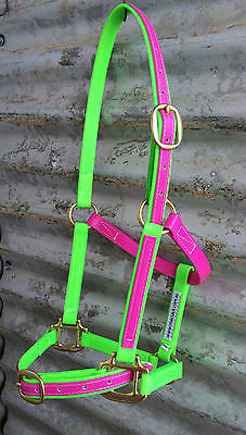 Horse Halter/Head Stall - BEST Quality