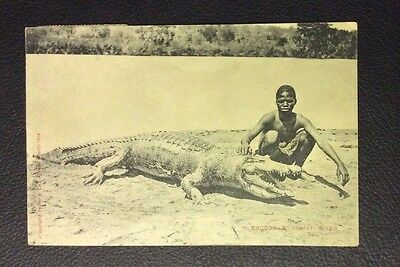 South African Native Boy and CROCODILE Postcard STAMPS