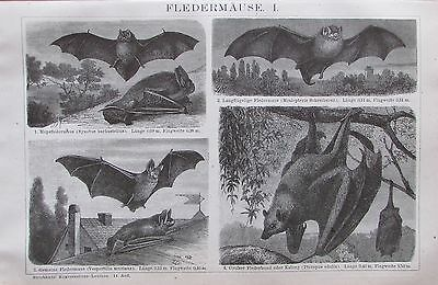 FLEDERMÄUSE I-II 1893 original 2 alte Drucke antik antique prints Lithografie