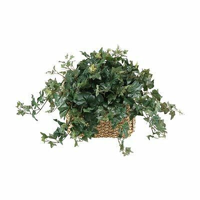 English Ivy In Rectangle Planter