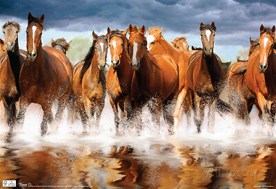 Horses Galloping Photograph Poster Poster Print, 19x13