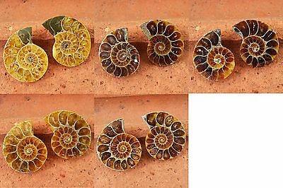 Reiki-Healing Crystal - Genuine Top Quality Ammonite Fossil Pair  - GEM EDH