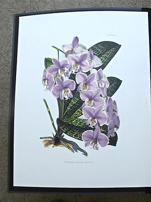 4 Orchid Prints....reproductions Of 19Th Century Hand-Colored Engravings