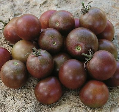 TOMATO Black Cherry 25 seeds vegetable garden NON GMO open polinated