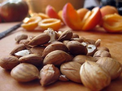 Apricot seeds - Kernels - Organic - FREE SHIPPING