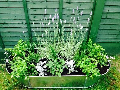 Metal Tin Bath Galvanised Steel  - Collection Only